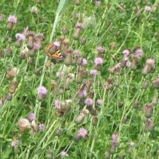 Sommer - Blumen Wiese - Grillen Zirpen - Wanderung - Sound Liste - Freie Verwendung
