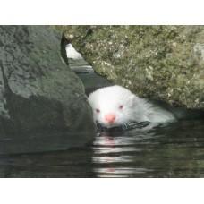 Zoo Reykjavik - Freie Verwendung