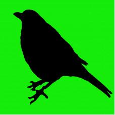 Blackbird (ID 1226)